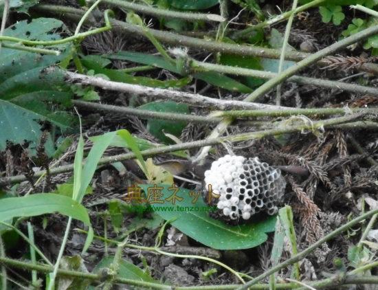蜂の巣 草刈り